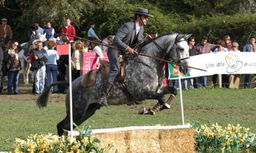 How to Work Your Horse, according to João Lynce
