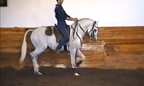 Lesson 06 – Lateral Work in Trot, Part 1