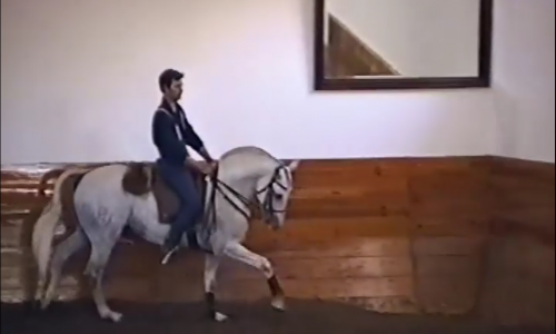 Lesson 10 – Canter Work