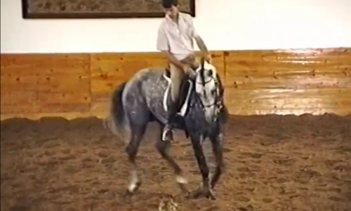 Lesson 11 – Improving Canter Pirouettes